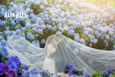繡球花 | HAUS |