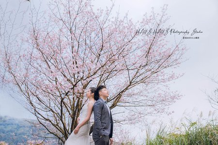 櫻花季 | HAUS