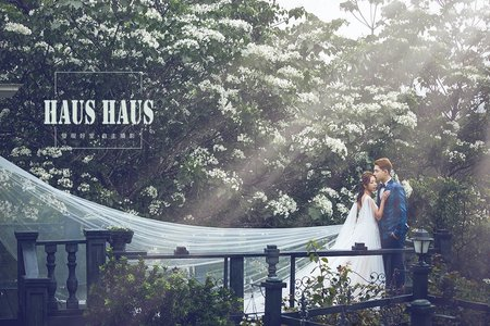 浪漫四月桐五月雪 | HAUS