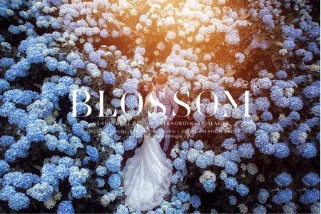 Blossom全數檔案全贈含婚宴新娘秘書